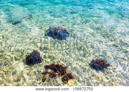 Clear Blue Transparent Water With Mussels On The Rocks.