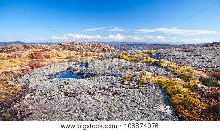 Norwegian Mountains, Landscape With Colorful Moss