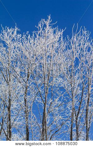 White Winter Wonderland With Blue Sky And Vertical Trees