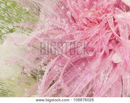Beautiful Pink Flower Frozen In Ice