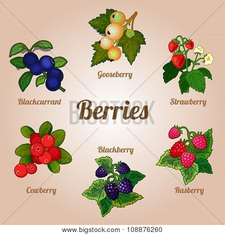 Set of delicious berries of various kinds