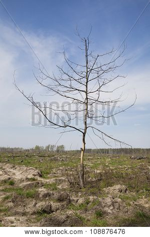 Dead tree in a wasteland