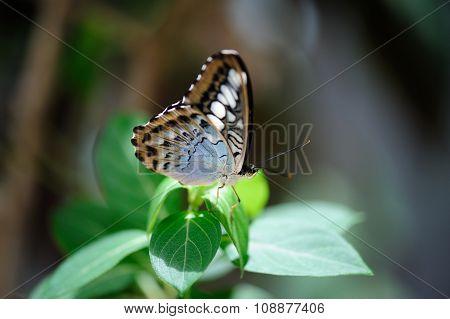 Beautiful Butterfly Sitting On Leaf