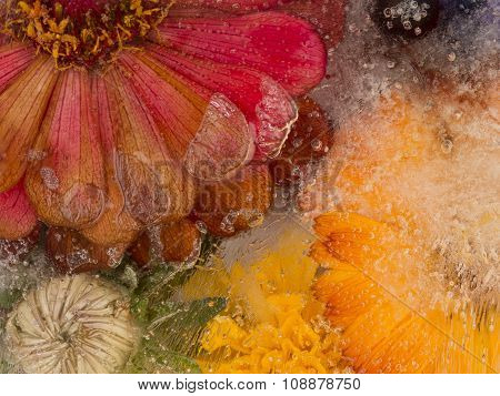 Bright Flower Ice Abstraction