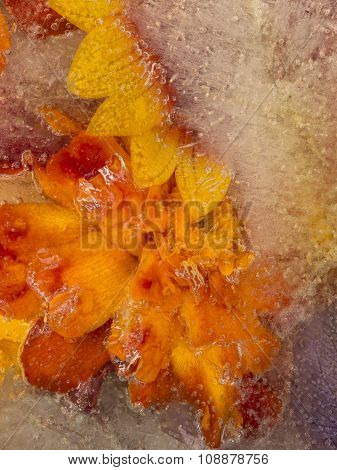 Bright Orange Ice Abstraction