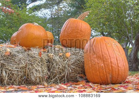 Halloween pumpkins and haystacks