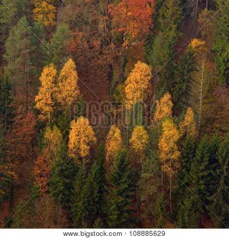 Colour Trees In Autumn Light