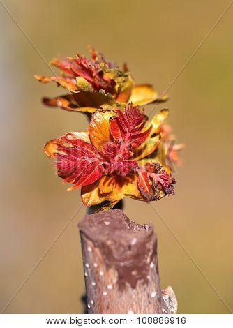 Beautiful Multi-colored Leaves