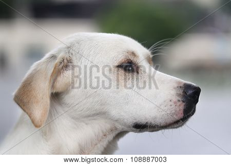 Beautiful Portrait Of A Dog