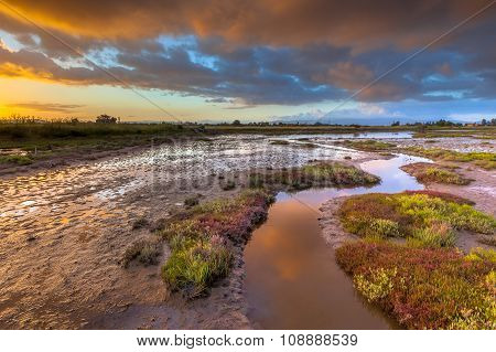Salicornia Estuary Sunrise