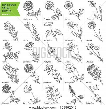 Hand drawn vintage flowers set. Volume 2.