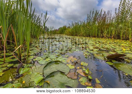 Floating Water Vegetation