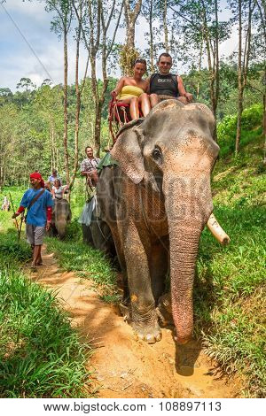 KHAO SOK, THAILAND - NOV 13, 2012: Unidentified people on the elephant trekking in Khao Sok National Park, Thailand. This is one of the biggest tourist attraction in Phang Nga province.