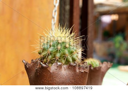 Close Up Be Side Of Small Cactus Decorate In The Garden