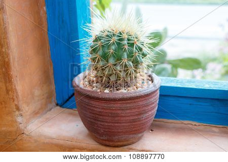 Small Cactus Side The Window For Decoration