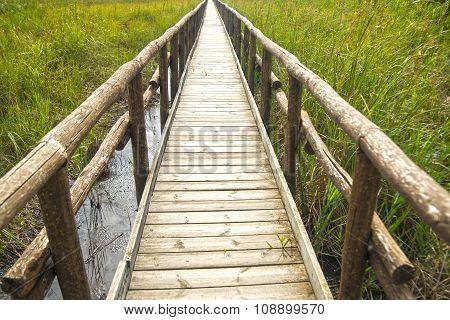 Pedestrian Path On Wooden Poles