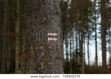 Red and white sign on tree