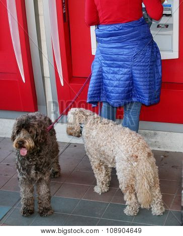 Dogs at ATM