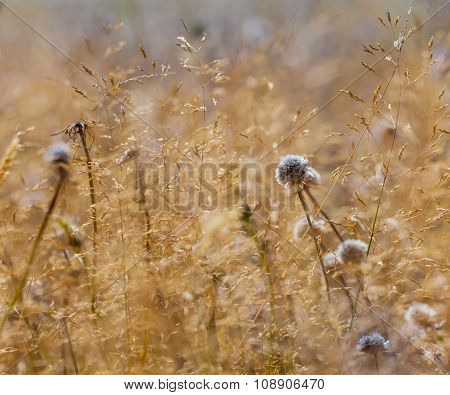 Brown Grassland With Blue Flowers