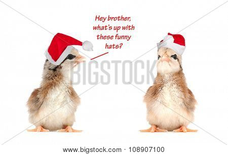 Two baby chicks wearing Santa hats, with text