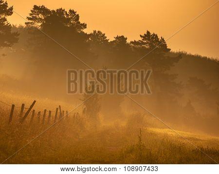 Orange Sunrise Over Path