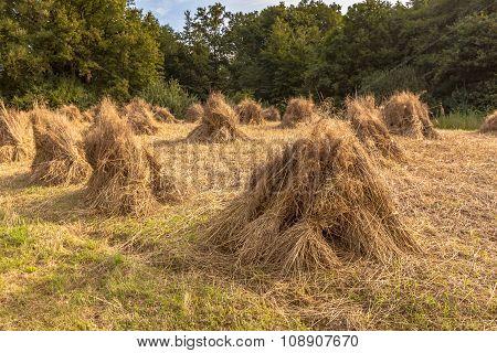 Traditional Haystack Of Buckwheat