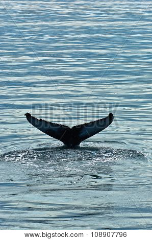 Watching humpback whale at Husavik bay area
