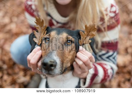 Cute terrier dog playing outdoor, two leaves on his ears.