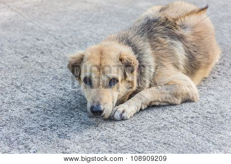 Stray Dogs Sleeping On The Street