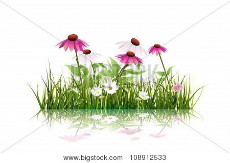 Vector illustration Green grass and white daisy, wildflower