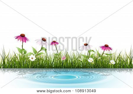 Vector Green Grass, White Daisy Flower With Reflection In Water