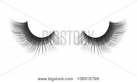 Thick And Long False Eyelashes On An Isolated White Background