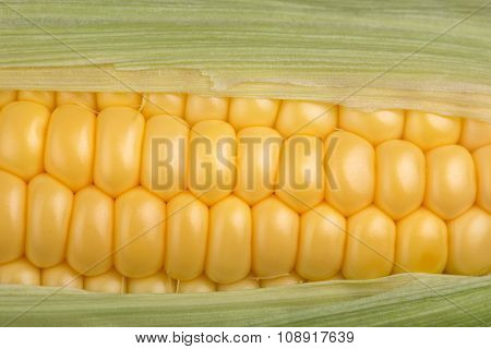 Fresh Corn Cob Maize Closeup Macro Top View