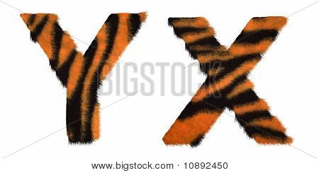 Tiger Fell X And Y Letters Isolated