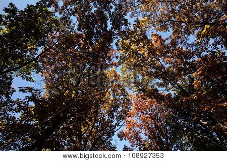 Autumn Sky Through Top Branches