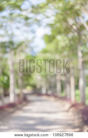 Abstract Blurred Photo Of Natural Pathway In Green Forest.