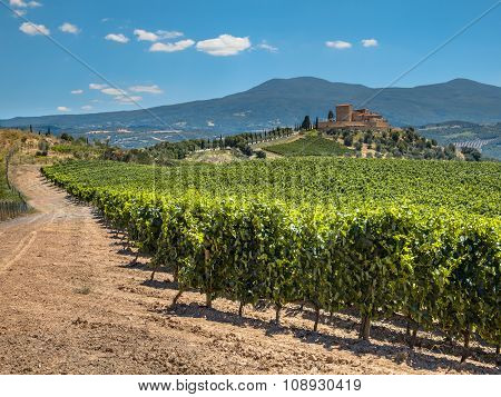 Vineyard At A Tuscany Winery Estate, Italy