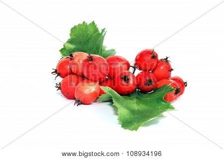 A Bunch Of Red Berries Of Hawthorn Isolated