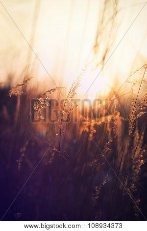 Winter grass