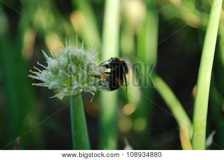 Green onions and bumblebee