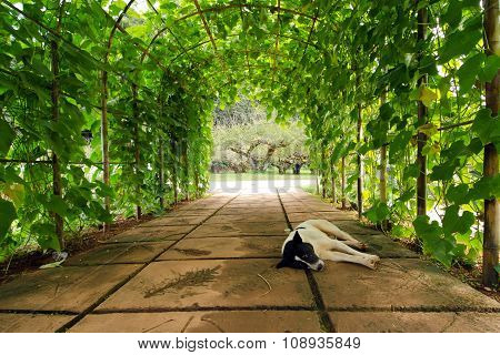 Tree arch with sleeping dog in the foreground in Chiangmai city Thailand