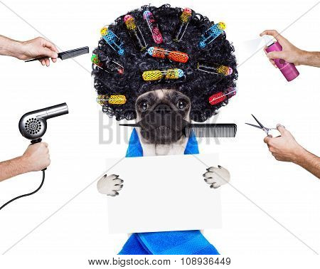 Hairdresser Groomer Dog