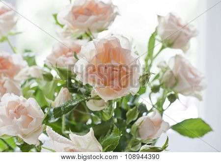 Tender Light Pink Tea Roses On A Blurred Background