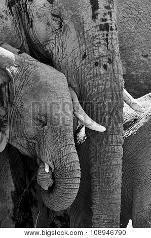 Portrait Of A Young Elephant And His Mom