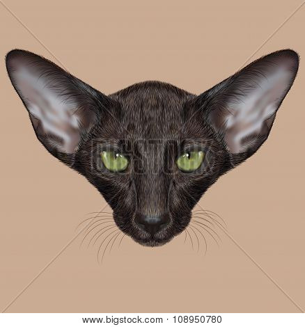 Illustrated Portrait of Black Oriental Shorthair Cat.