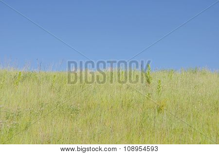 Field Grass Against The Blue Sky