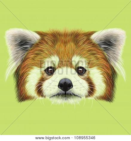 Illustrated Portrait of Red Panda