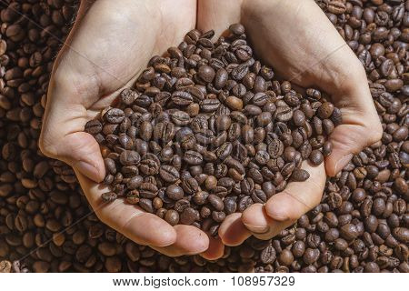 Cupped Hands Holding Handful Of Roasted Coffee Beans