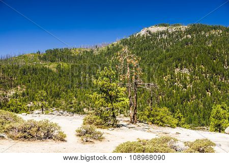 Meager Trees On Rockets  In The Yosemite National Park