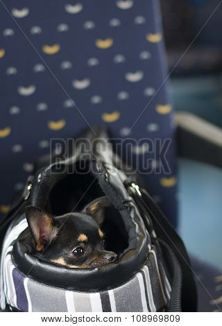 Dog In Bag And Watching In The Train